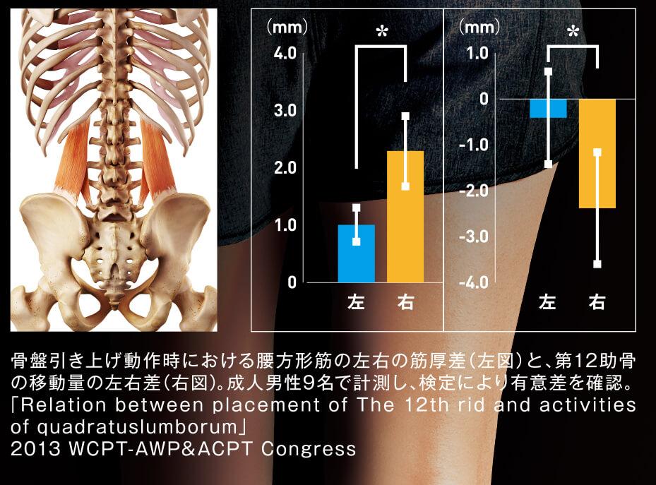 腰方形筋の研究